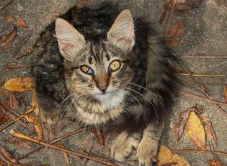 Un gatto malato di Aids viene curato a spese del comune, insorge la polemica