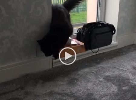 Un gatto entra in casa e vede che è stata cambiata la Moquette