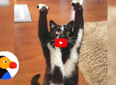Gatto: E ora tutti insieme su le zampe