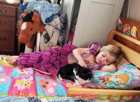 Baja un gatto difficile che non sopportava la presenza  degli umani umani, ha ceduto alla dolcezza di questa bambina