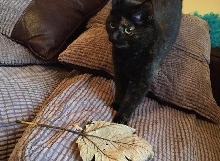 Il suo umano non gradiva i topi, così la gatta ora gli porta delle enormi foglie