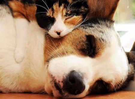 Cani e gatti fiutano le malattie dei loro umani?