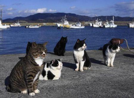 """İstanbul: Il gatto è un """"ospite di Dio"""""""