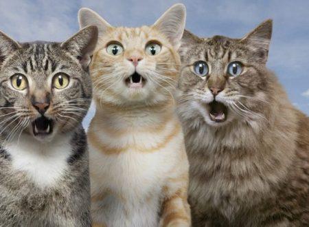 Massacrati tre gatti. Taglia sui colpevoli