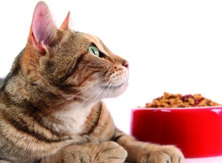 Alcuni gatti prima di magiare ti guardano altri vogliono essere accarezzati.
