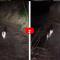 Smarriti con l'auto nel bosco, spunta un gatto e li guida sulla giusta strada