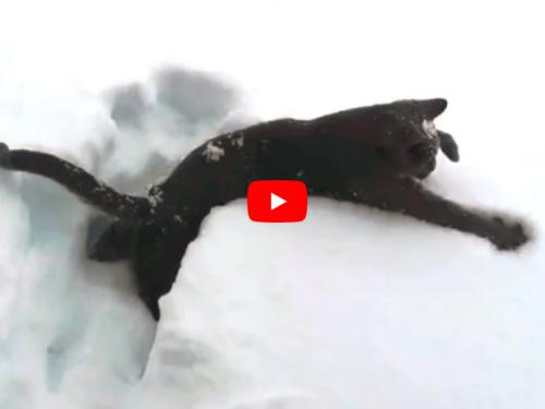 Gatti che vedono la neve per la prima volta