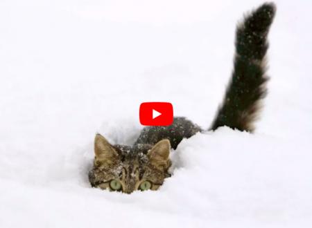 I gatti delle nevi, quelli originali