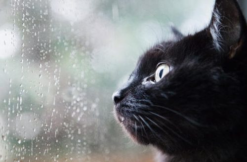 I nostri amici felini percepiscono prima di noi come cambierà il tempo. Superstizioni o verità