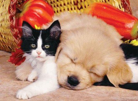 Russia 2018: migliaia di cani e gatti randagi rischiano di essere uccisi