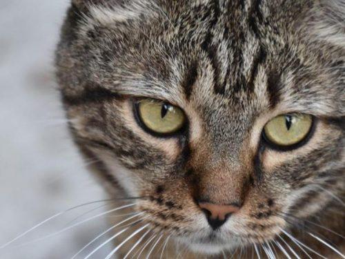 Trapani: prende a bastonate un gatto, condannato