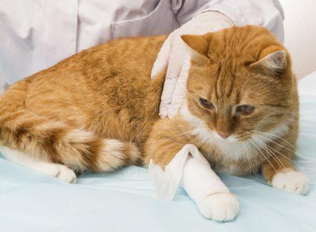 Sintomi di dolore nel gatto, identificarli in tempo è molto importante
