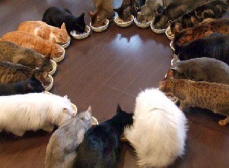 Gatti in casa: esiste un numero massimo se si vive in un condominio?