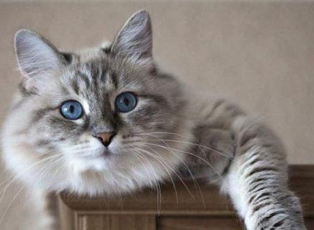 Sintomi nel gatto che necessitano una visita immediata dal veterinario
