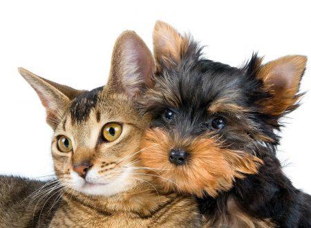 Articolo dedicato al tema del testamento in favore degli animali