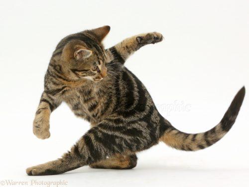 Il tuo gatto si morde la coda? Se lo fa spesso, fai attenzione perché può essere segno di problemi di salute.