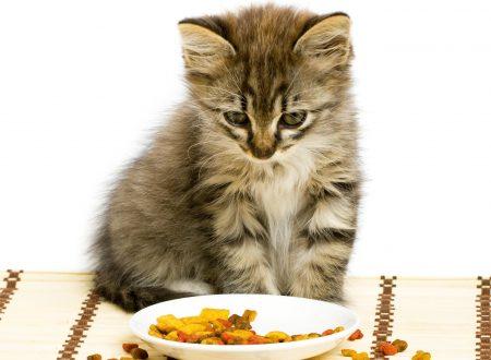 Benefici dell'olio di pesce nei gatti