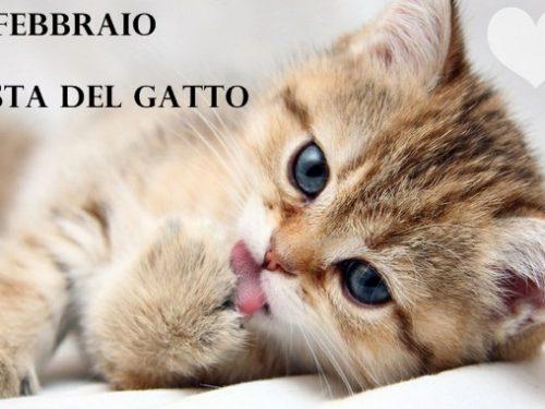 Giornata nazionale del gatto, ecco perché si celebra il 17 febbraio