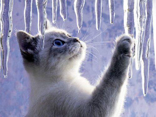 Freddo: come aiutare cani e gatti, e gli animali selvatici