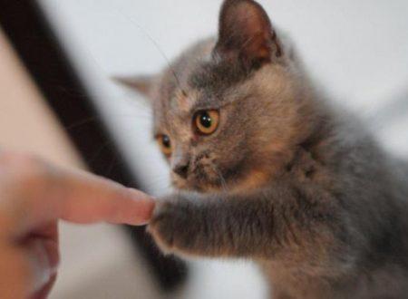 Destro o mancino,  secondo alcuni studi l'aggressività del gatto può essere influenzata da questo aspetto