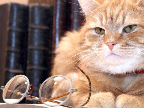 Quanti anni può vivere un gatto e cosa possiamo fare per aumentare la longevità