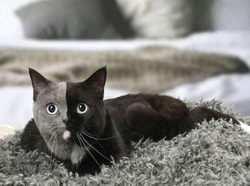 Narnia, la bellissima gatta con due facce