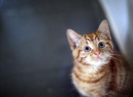 Il nome del gatto. Quello che un gatto distingue dalle altre parole sarà unicamente il tono con cui lo si chiama.