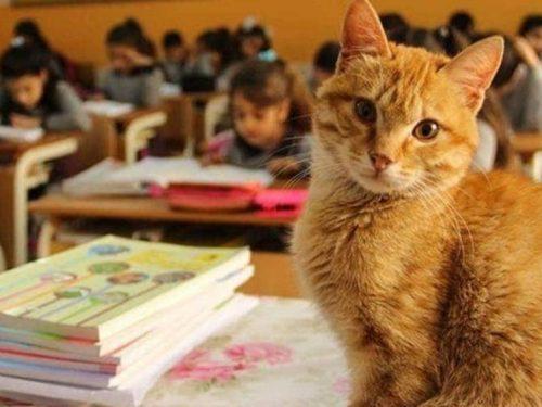 Tombi, torna in classe con il benestare del ministro dell'istruzione turco