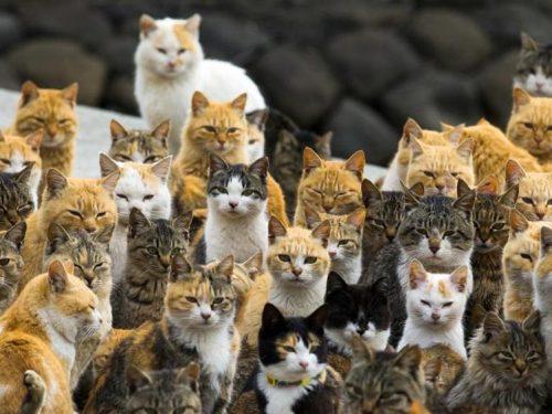 I paradisi dei gatti: Aoshima, l'isola del Sol Levante dove i gatti vollero farsi re