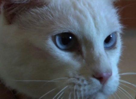 Achille il gatto indovino dei prossimi mondiali in Russia