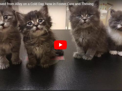 Trovati otto gattino abbandonati in strada