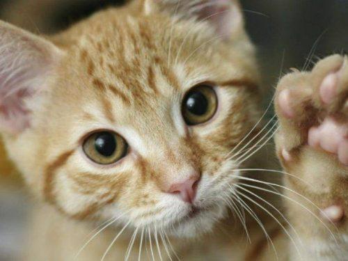Una bella iniziativa per aiutare i gatti randagi che vivono in città