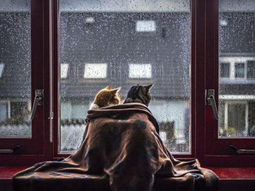 I gatti consapevoli di Cesare Pavese