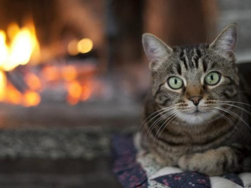 Gatto salva la sua famiglia dall'incendio scoppiato in casa di notte