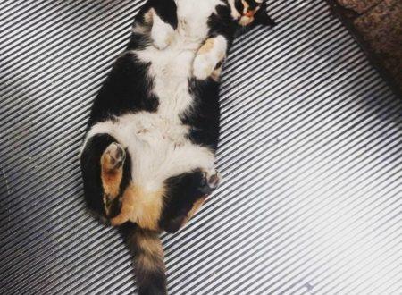 In Turchia c'è un gatto calico che adora dormire sulle scale mobili della metro