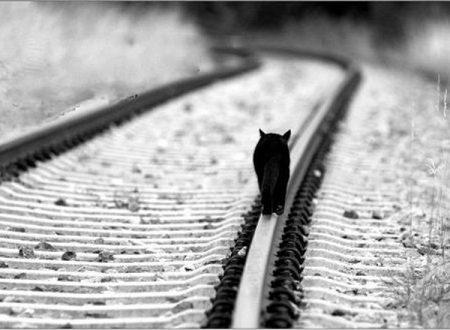 Un gatto può anche decidere di rompere un'amicizia.