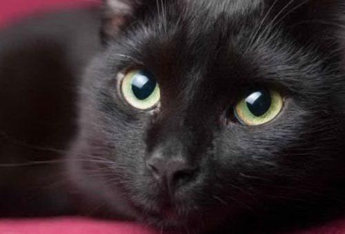 Uccide il gatto nella lavatrice e posta il video: 320 mila firme già raccolte per chiedere il carcere
