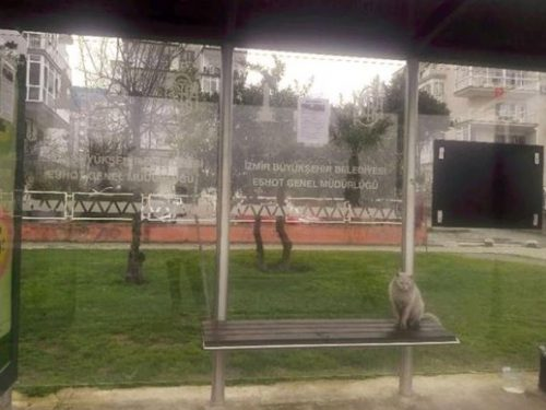 Gatto allontanato alla fermata non avevano fatto i conti con il signor Davut Sabirsiz