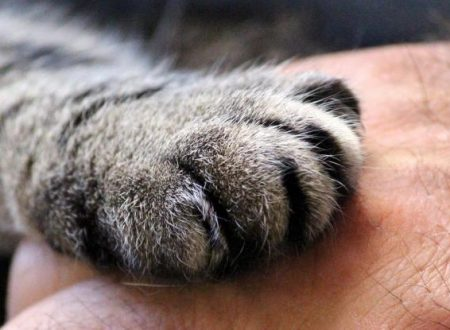 I nomi più belli e originali per le gatte femmine secondo un sondaggio