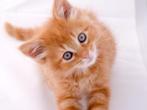 Il flehmen nel gatto: cos'è e cosa significa