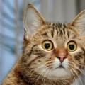 I gatti si offendono se parliamo male di lui ?