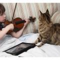 Chi vive con un gatto è più felice.