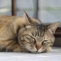 I vari tipi di vomito nel gatto e quando ci si deve preoccupare.