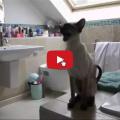 Questi gatti chiamano la loro mamma umana che nel frattempo sta facendo una doccia.