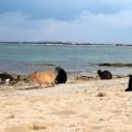 La spiaggia dei gatti. In Sardegna, un paradiso di sabbia, mare e gatti.
