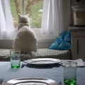 Gli spazi felini - Come il gatto suddivide la casa.