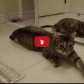 Questi minuscoli gattini accorrono quando la mamma adottiva li chiama.