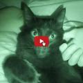 I vostri gatti dormono nel vostro letto