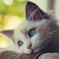 Come capire se un gatto si sente solo