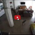 Con l'aiuto del gatto, il cucciolo ha imparato ad abbaiare meno e rilassarsi di più.
